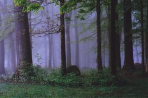 039 Fog a