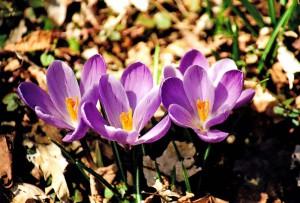 044 Spring